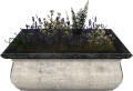 EN-Placeable-Lavender.png