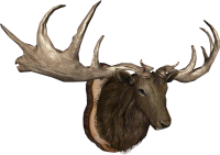 EN-Placeable-Trophy Elk.png