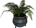 EN-Placeable-Fern.png