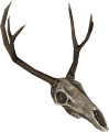 EN-Placeable-Deer Skull.png
