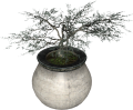 EN-Placeable-Juniper.png