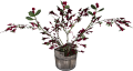 EN-Placeable-Holly (Potted).png
