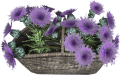 EN-Placeable-Flower Basket.png